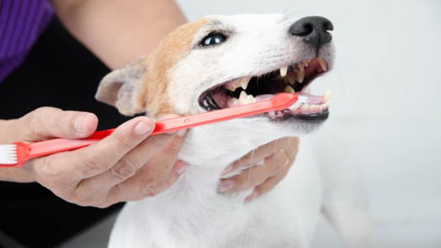 dog dental hygiene tips from cedar river animal hospital in renton washington
